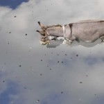 Donky-on-Prayer-cloud